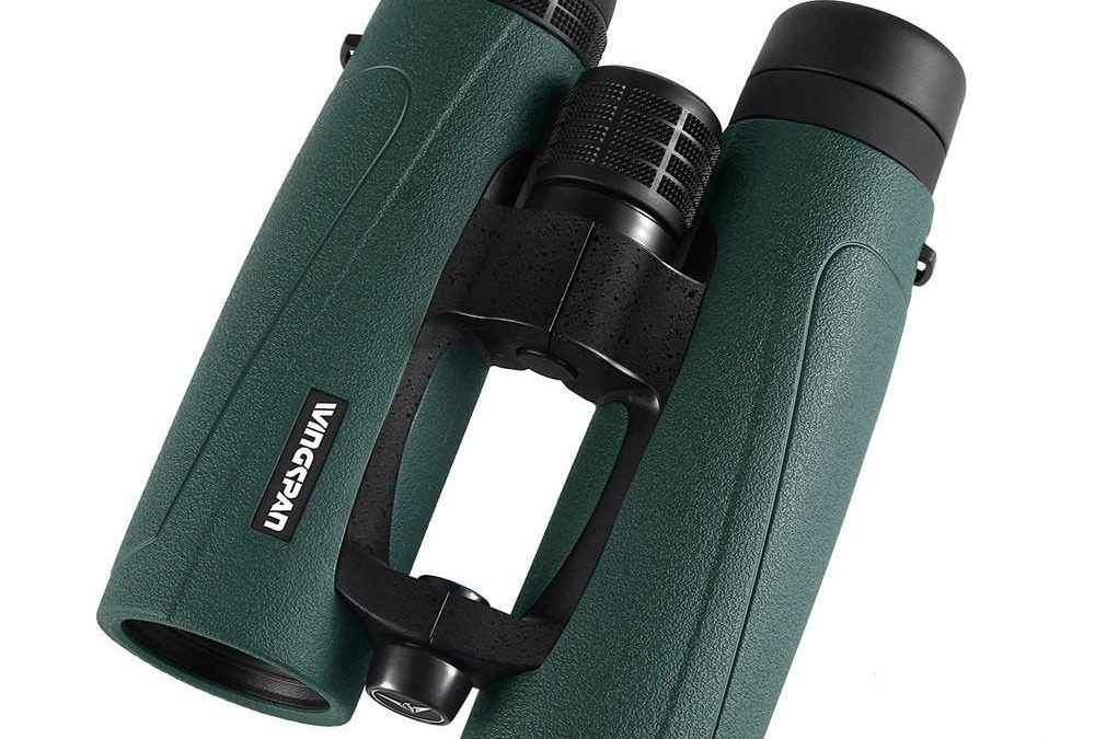 The 5 Best Binoculars for Birding
